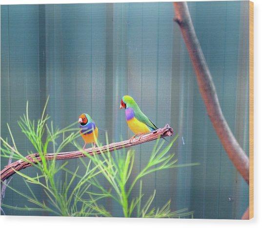 Aussie Rainbow Lovebirds Wood Print