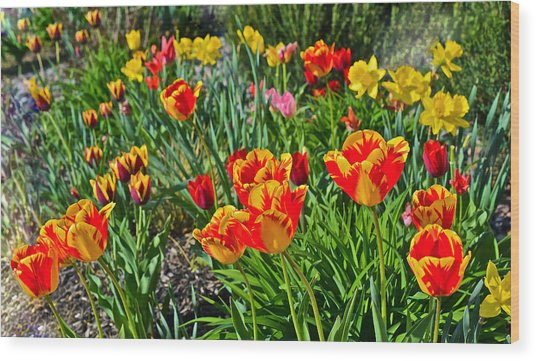 2015 Acewood Tulips 1 Wood Print