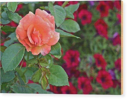 2015 Fall Equinox At The Garden Sunset Rose And Petunias Wood Print