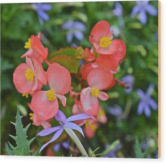 2015 Mid September At The Garden Begonias 2 Wood Print