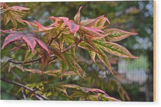2015 Mid-september At The Garden Japanese Maple 1 Wood Print