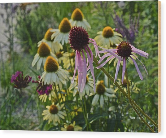 2015 Summer At The Garden Coneflowers Wood Print