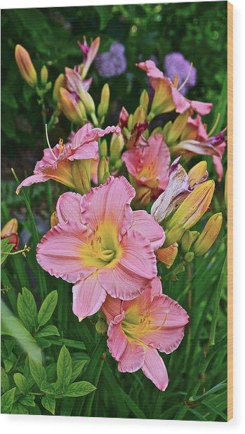 2015 Summer At The Garden Daylilies 1 Wood Print