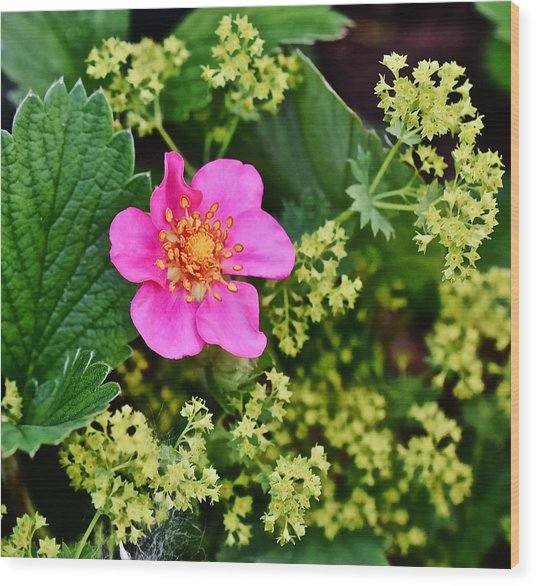 2015 Summer's Eve At The Garden Lipstick Strawberry Wood Print
