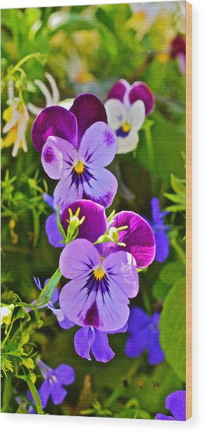 2015 Summer's Eve At The Garden Pansy Totem Wood Print