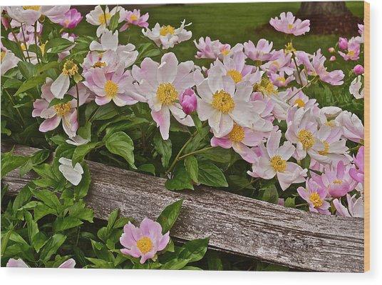 2015 Summer's Eve Neighborhood Garden Front Yard Peonies 3 Wood Print