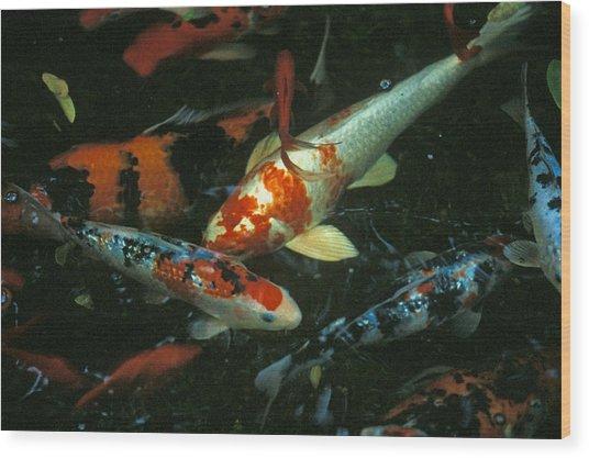 The Koi Pond Wood Print by Marc Bittan