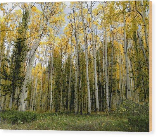 2423 Wood Print