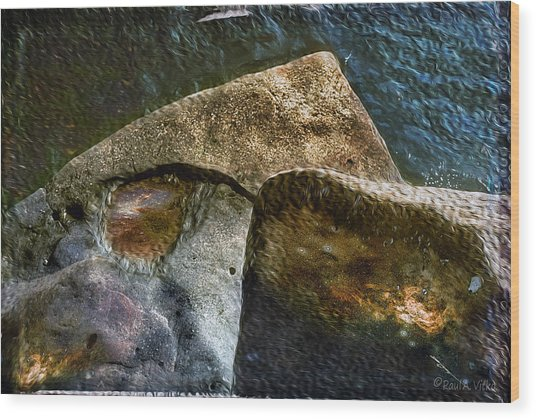 Stone Sharkhead Wood Print