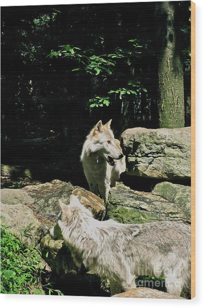 The Wild Wolve Group A Wood Print by Debra     Vatalaro