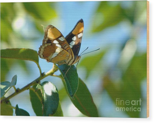 Butterfly Wood Print by Marc Bittan