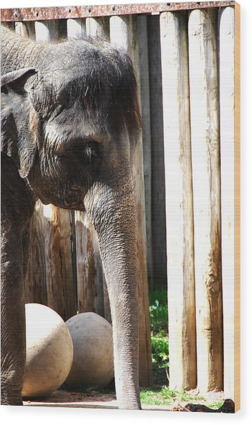 Asian Elephant Wood Print by Thea Wolff