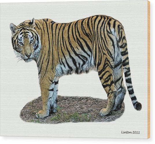 Asian Tiger Wood Print by Larry Linton