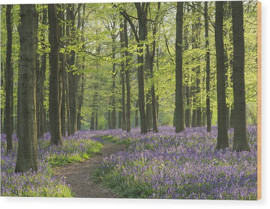 Bluebell Wood Wood Print by Liz Pinchen