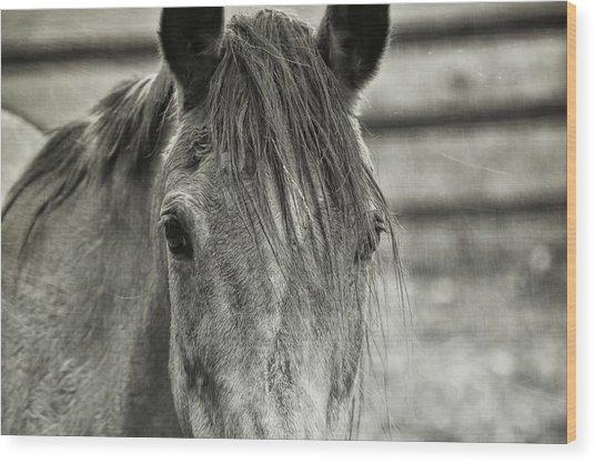 Buckskin Black And White Wood Print by JAMART Photography