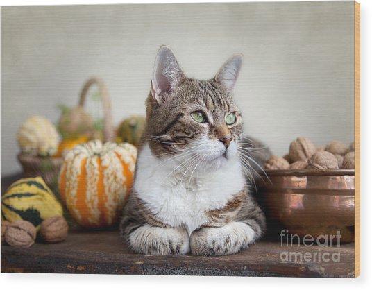 Cat And Pumpkins Wood Print