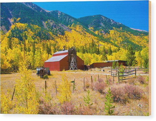 Colorado Aspen Trees Wood Print by Terry Runion