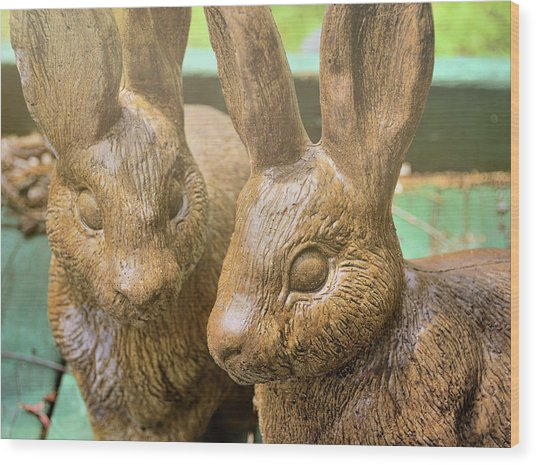 Garden Cottontails  Wood Print by JAMART Photography