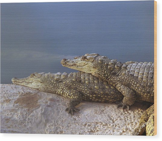 Crocodile Resting Wood Print