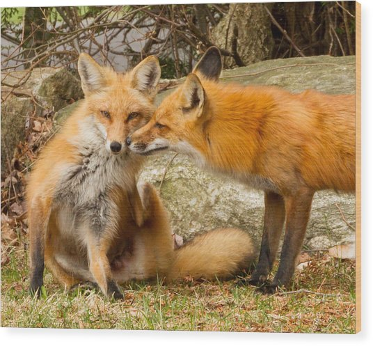 Foxes In Love Wood Print