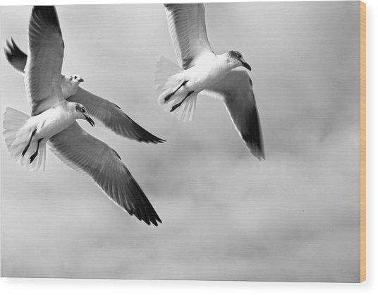 3 Gulls Wood Print