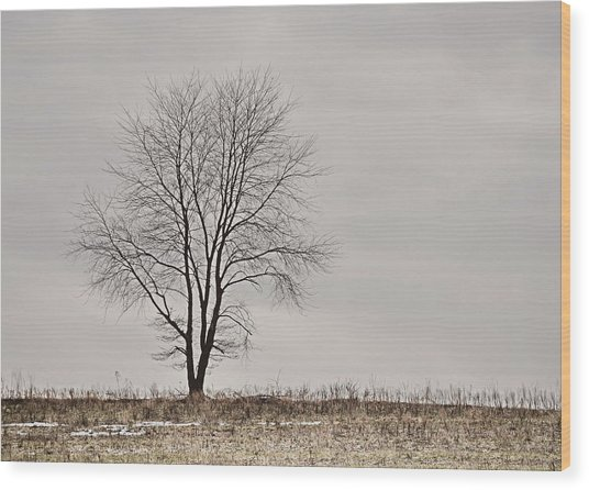 February Horizon   Wood Print by JAMART Photography