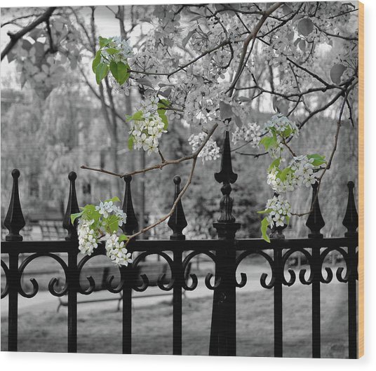 Joyce's Spring Time Wood Print by JAMART Photography
