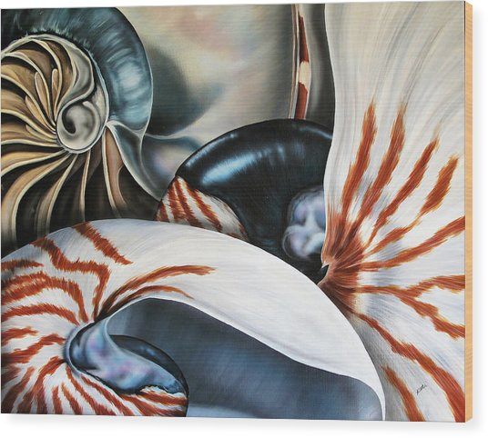 3 Nautilus Wood Print