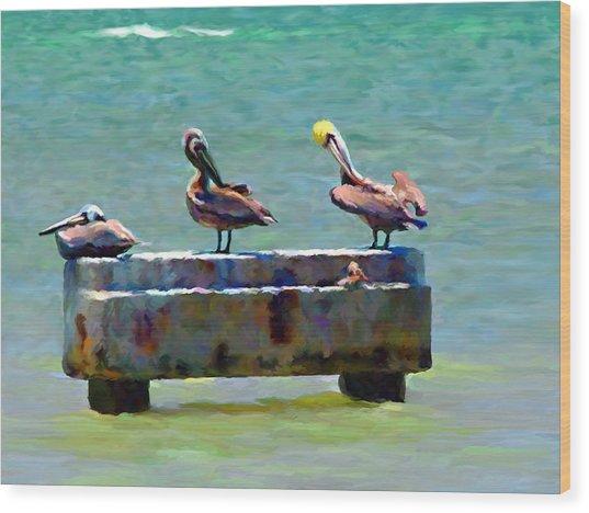 3 Pelicans Wood Print