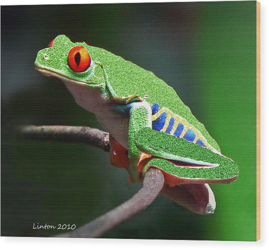 Red-eyed Leaf Frog Wood Print by Larry Linton