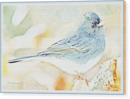 Slate-colored Junco, Snowbird, Male, Animal Portrait Wood Print