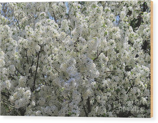 Spring Wood Print by Patrick  Short
