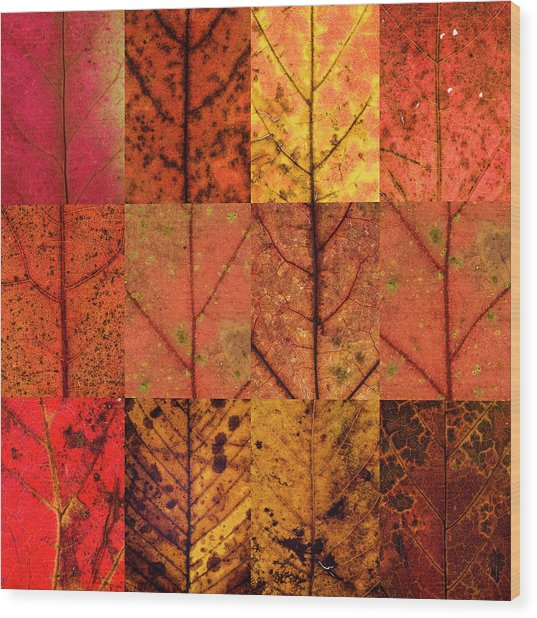 Swatches - Autumn Leaves Inspired By Gerhard Richter Wood Print