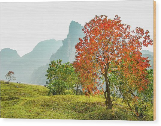 The Colorful Autumn Scenery Wood Print