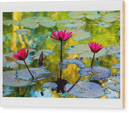 3 Water Lilys Wood Print