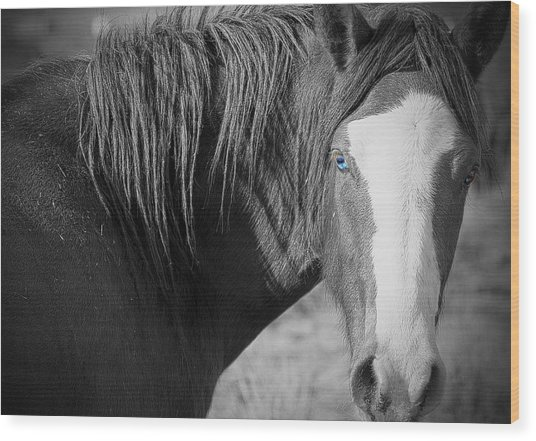 Wild Mustang Horse Wood Print