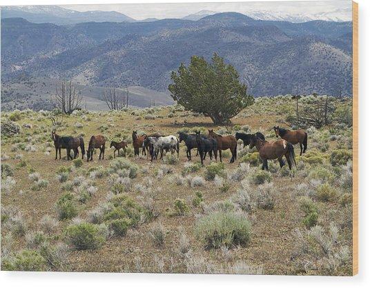 Wild Mustang Horses Wood Print