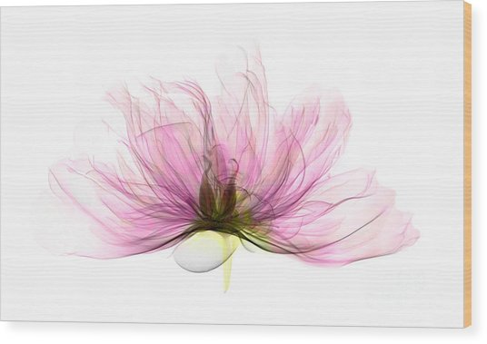 X-ray Of Peony Flower Wood Print