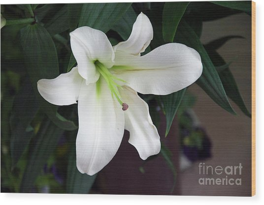 White Lily Wood Print