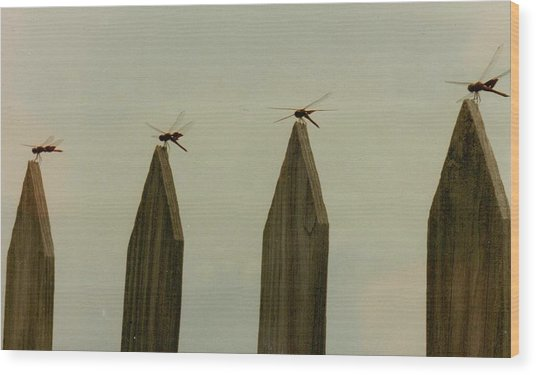 4 Dragon Flies...... Wood Print