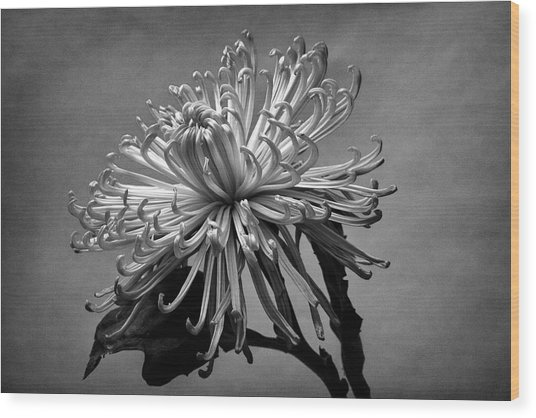 Floral Still Life Wood Print by Robert Ullmann