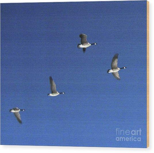 4 Geese In Flight Wood Print