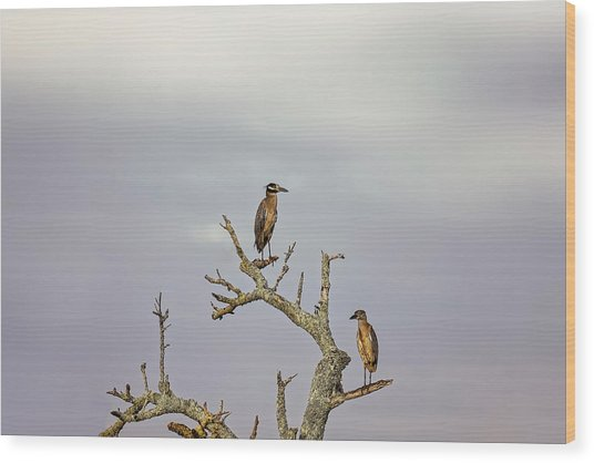 Green Heron Wood Print