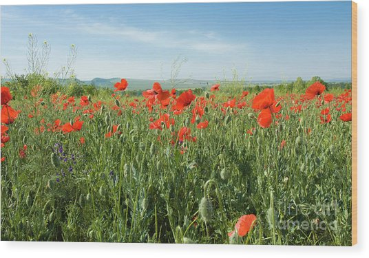 Meadow With Red Poppies Wood Print