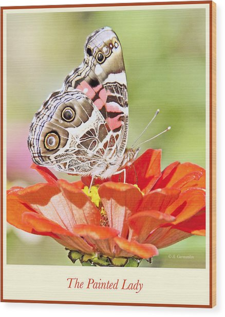 Painted Lady Butterfly On Zinnia Flower Wood Print