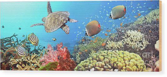 Underwater Panorama Wood Print