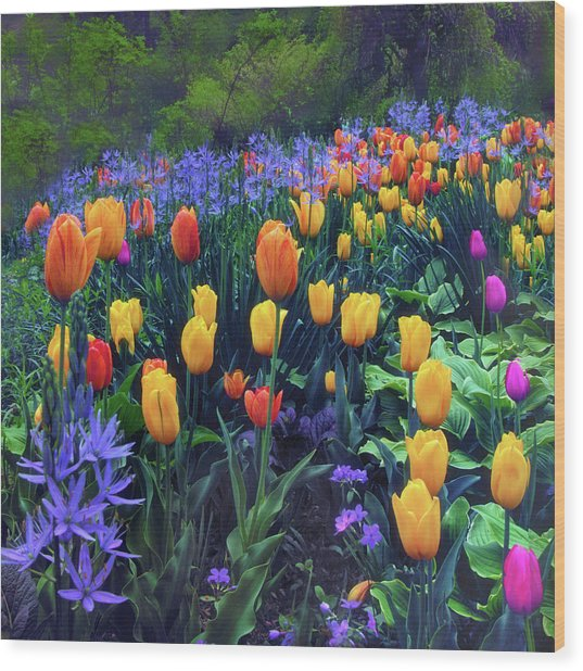 Procession Of Tulips Wood Print
