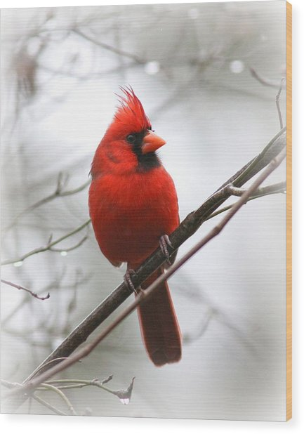 4772-001 - Northern Cardinal Wood Print