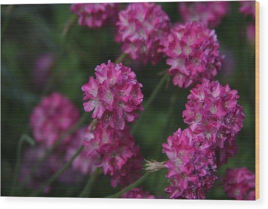 Flowers Wood Print by Luke Robertson