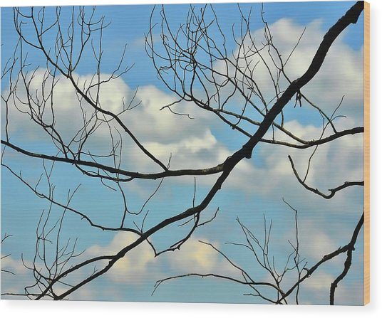 Bare Branches Wood Print by JAMART Photography